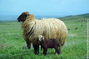 hto-posmotret-v-armenii-turistu
