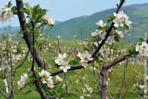 priroda_armenii