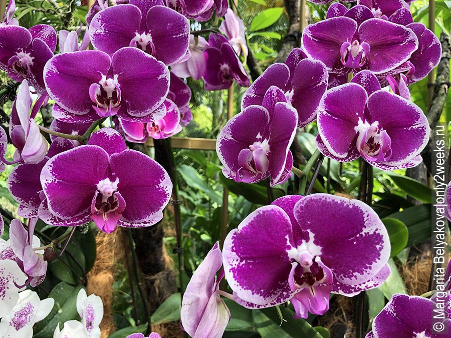 National-Orchid-Garden-Singapure