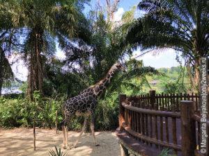 singapore-zoo-foto