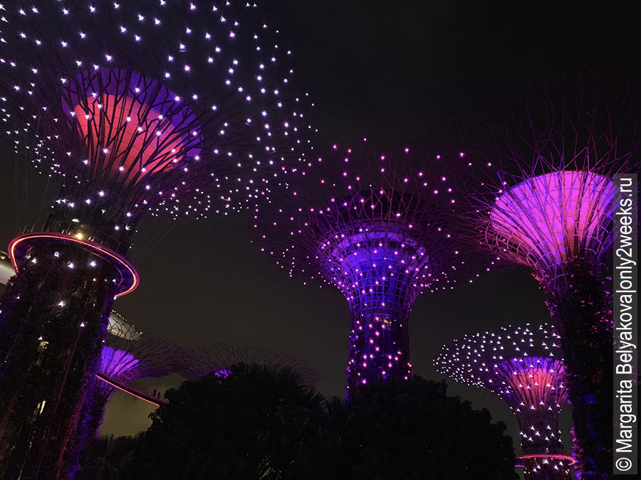 Supertree-Grove- singapure