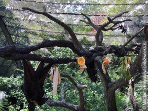 singapurskiy-zoopark-vpechatleniya