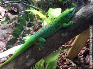 singapore-zoo-animals