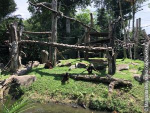 obezyany-v-zooparke-singapura