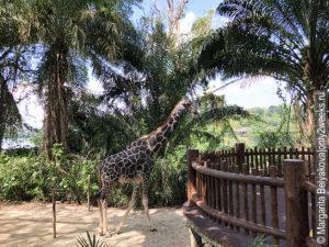 dostoprimechatelnosti-singapura-zoopark
