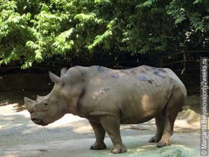 singapur zoopark nochnoye safari