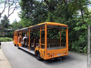 singapore-zoo-kak-dobratsya