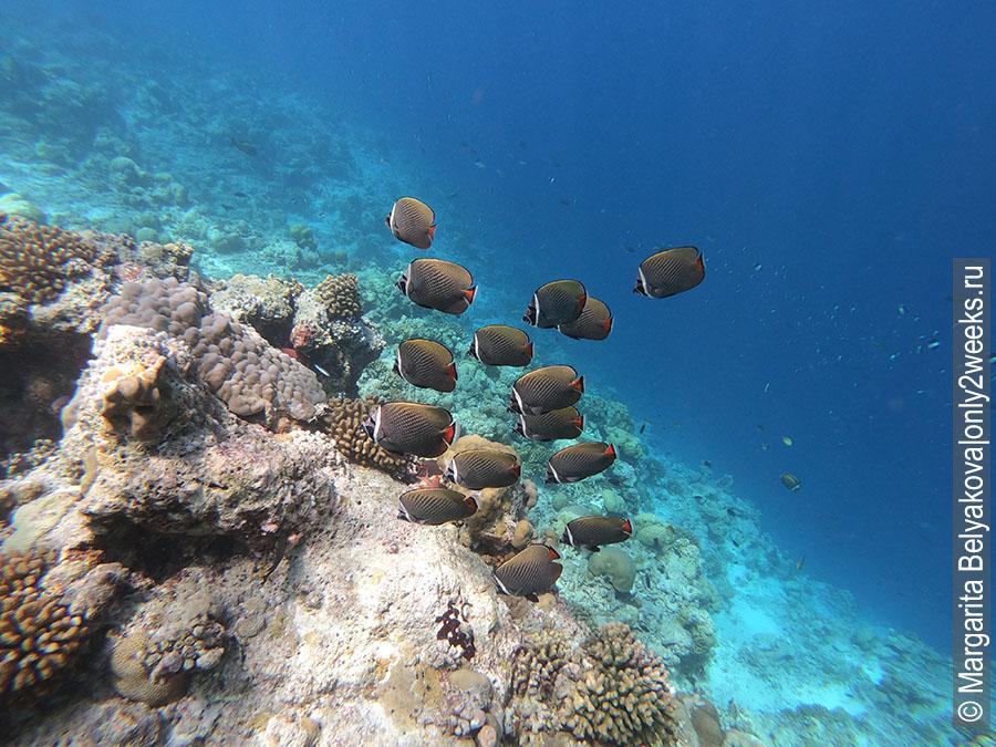 Podvodnyy-mir-Maldiv-foto