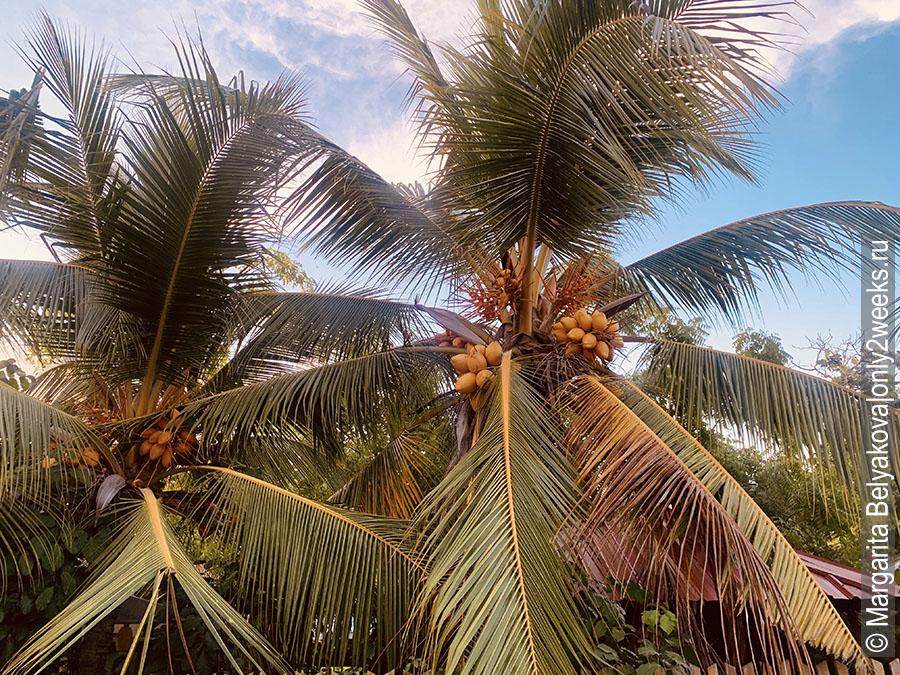 ostrov-thoddoo-otzyvy-turistov-i-foto
