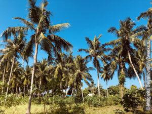 ostrov-Thoddu-plyusy-i-minusy
