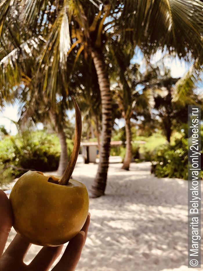 frukty-na-maldivakh-foto
