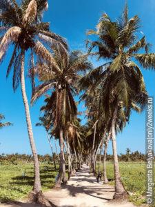 ostrov-Toddu-na-Maldivakh-otzyvy