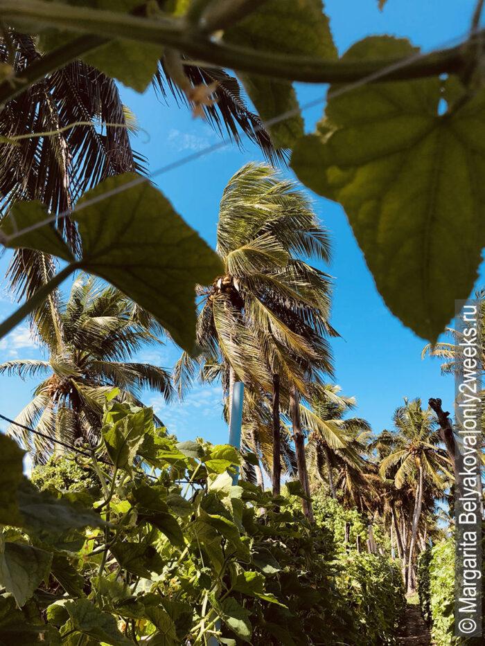 lokalnyye-ostrova-maldiv-otzyvy-turistov
